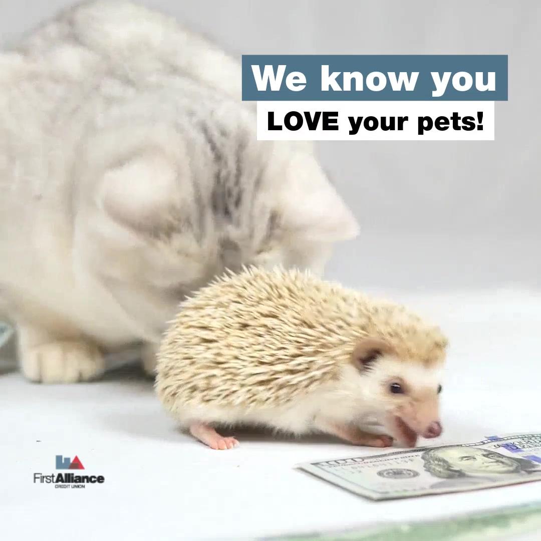 Pet Savings Account Video-hd