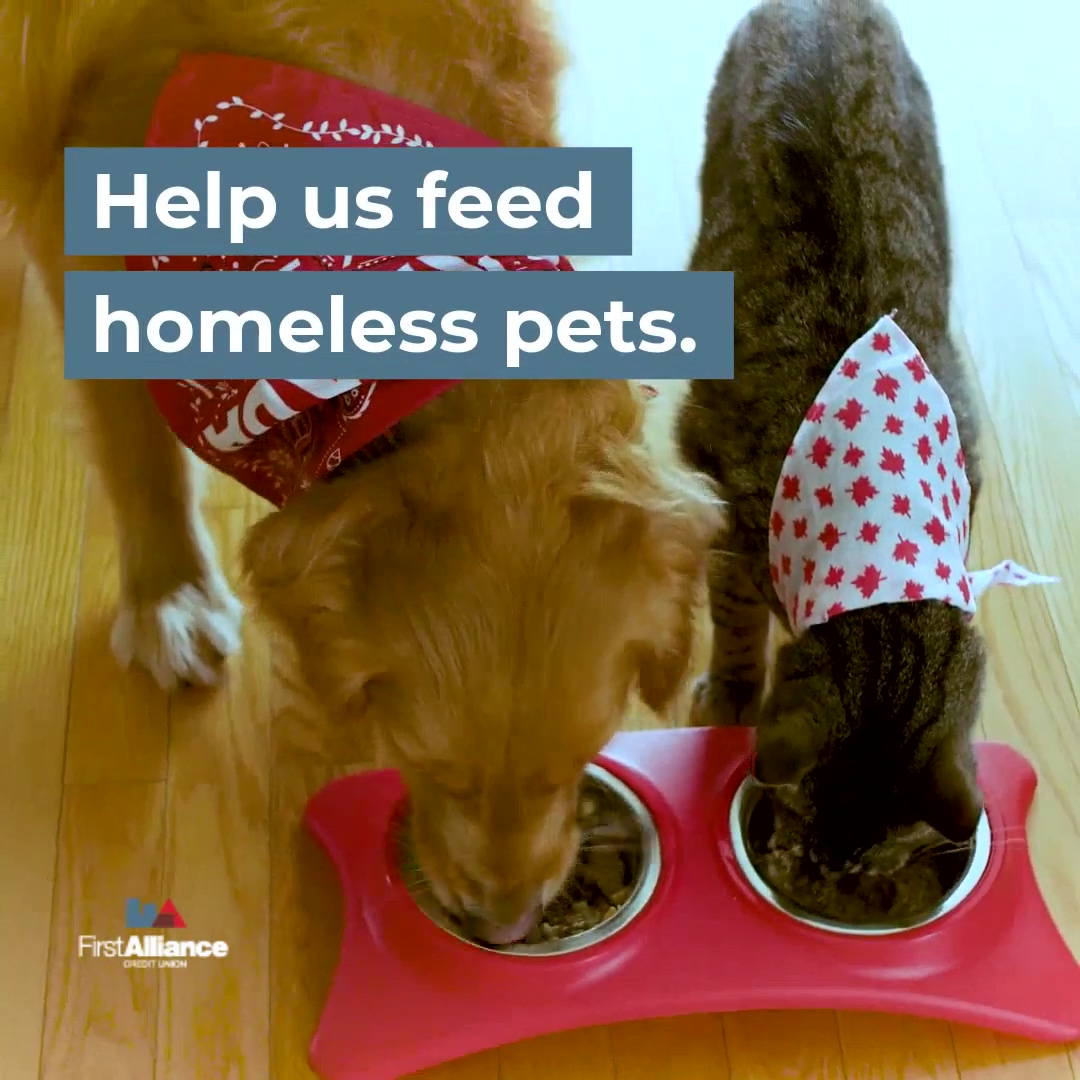 Pet Month  Donation Video  June 2019-hd
