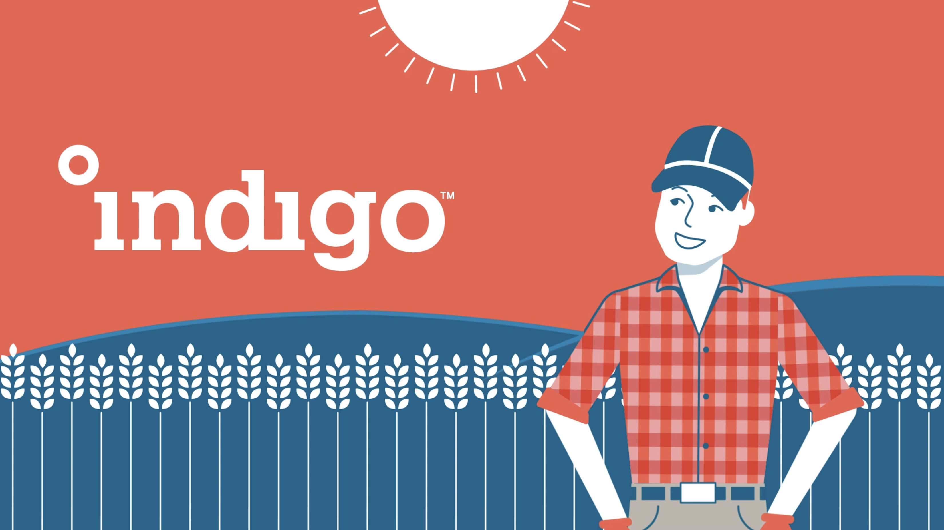 Indigo Australia Explainer Video