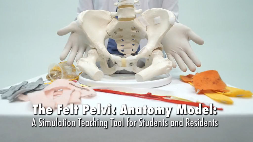 OBGM - The felt pelvic anatomy model: A teaching tool for students and  residents