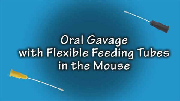 MouseGavage