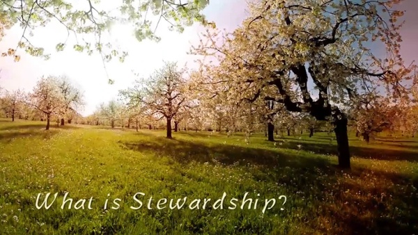 What Is Stewardship