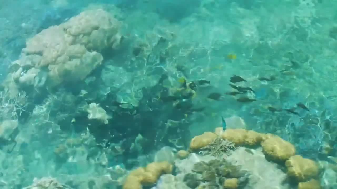 zoom-fish-bawah-reserve