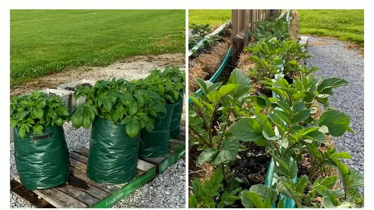 4_C2L_Fertilizing_ Engagement