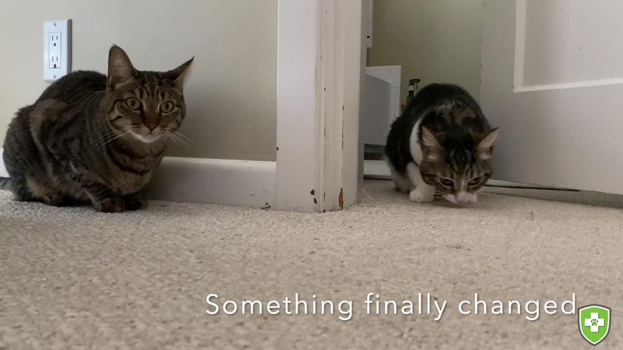 Cats Reuniting-1