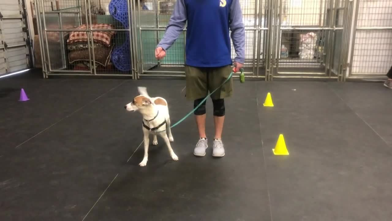 Auto Sit On Leash Examples