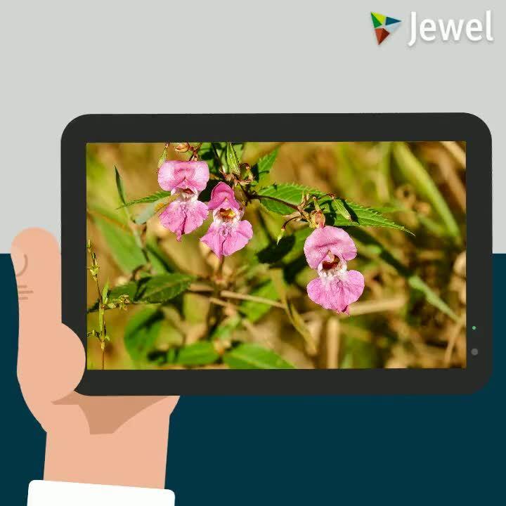Video Invasieve Soorten