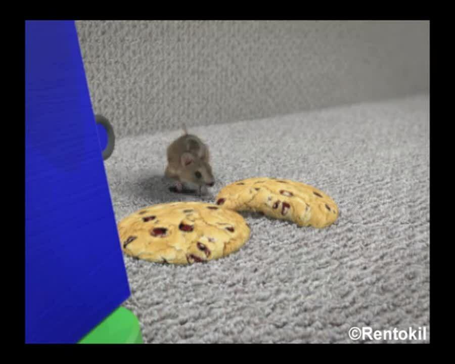 ZA - Rentokil - Video - Scampermouse - Food