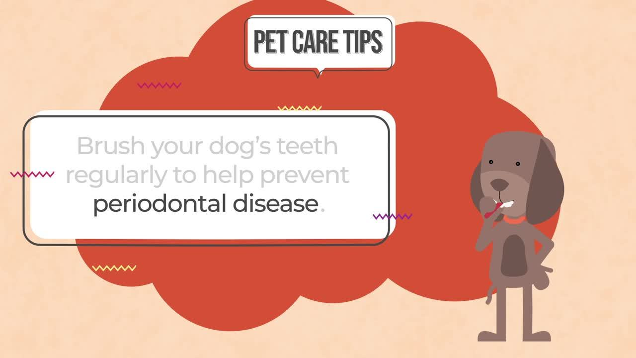 PCT-0001-pet-care-tips-periodontal-disease-BFVC01-200102