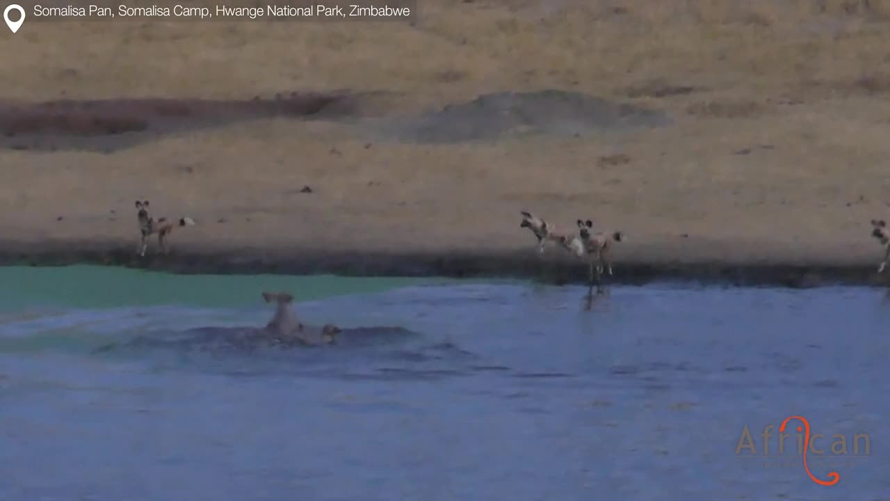 Wild Dogs vs Young Kudu vr2_2017