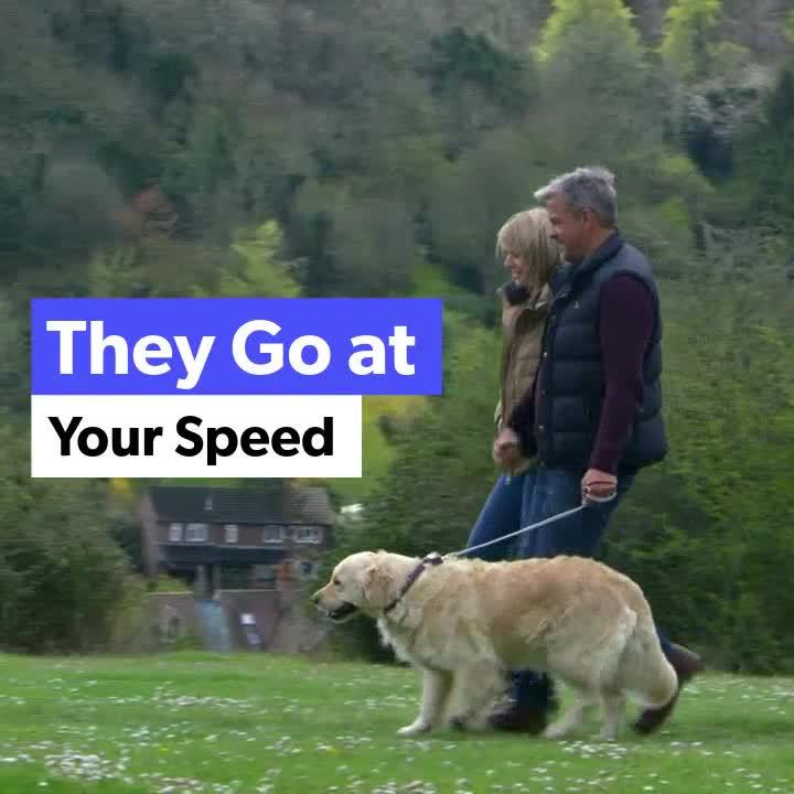 Senior Dogs are Great Video