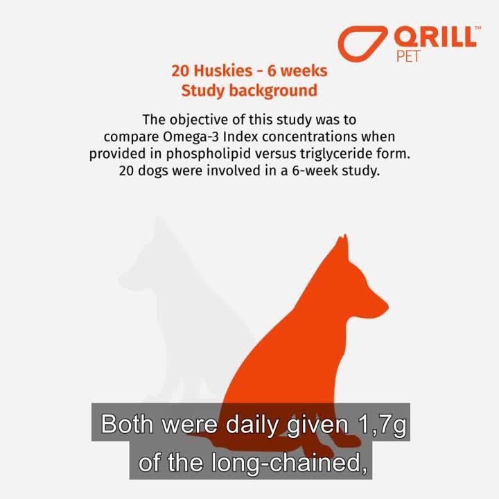 Alaska Husky Diet Study - QRILL Pet